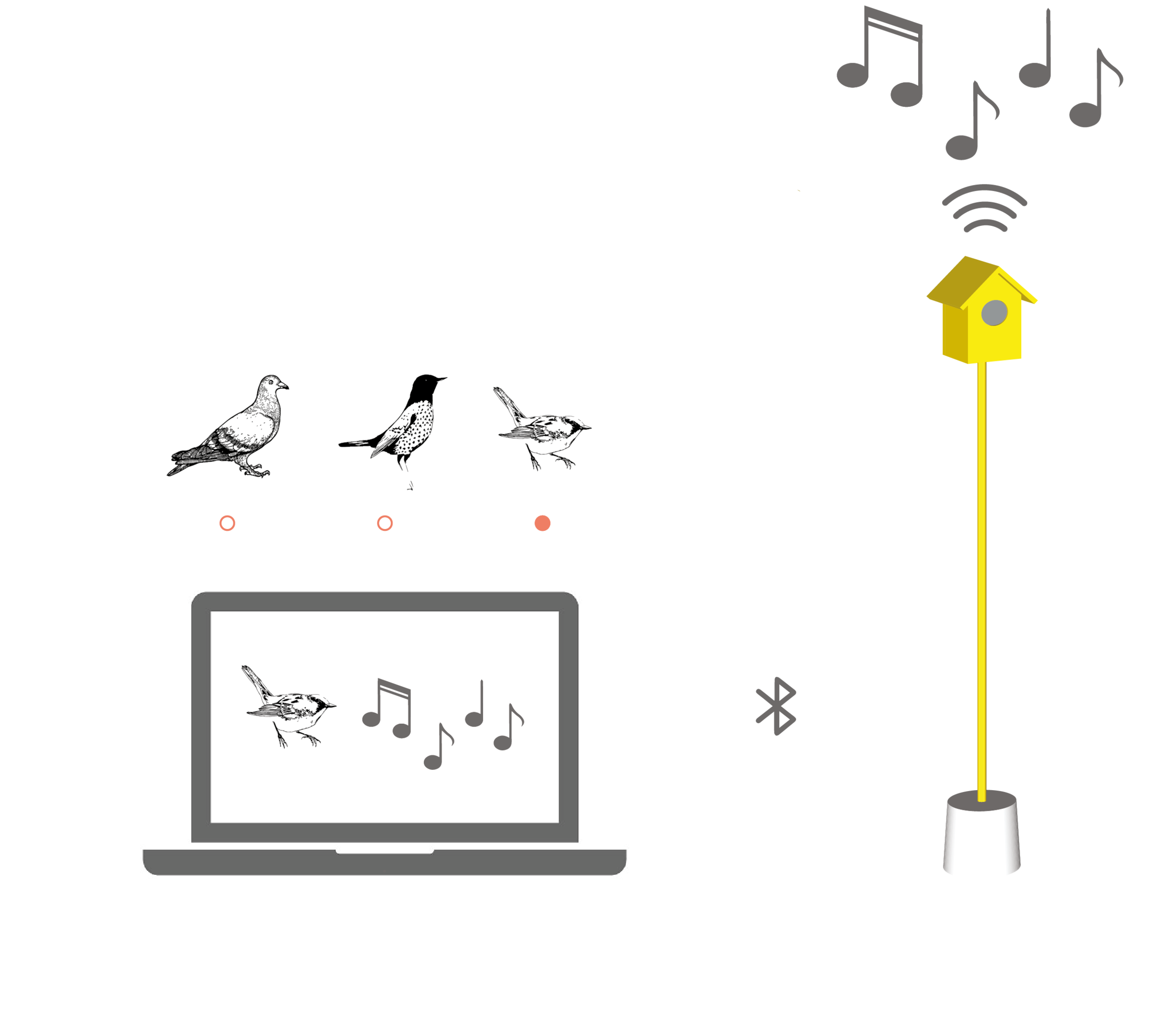 Hearing Birdsong Website Animations-17.png