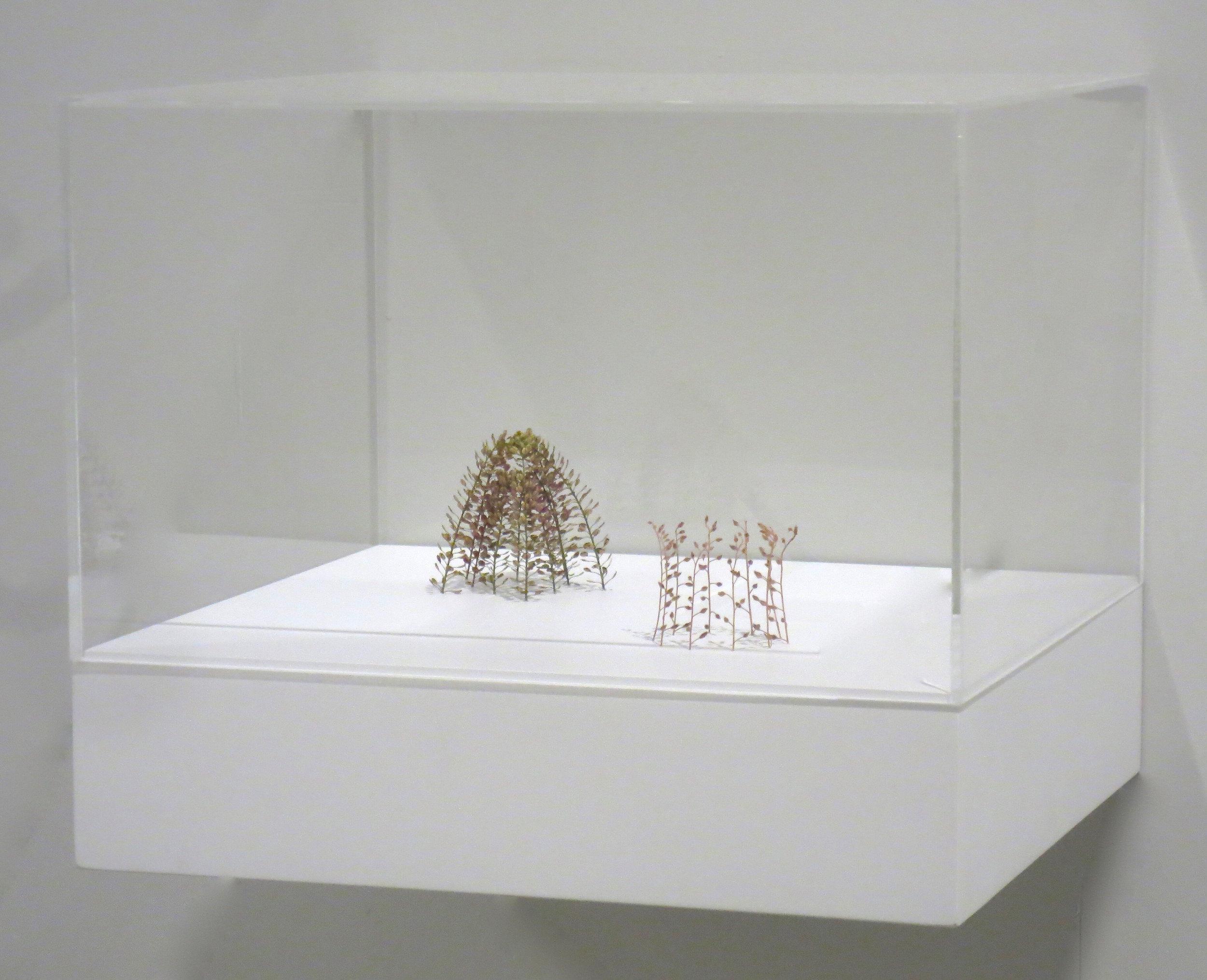 Christiane Löhr  (B. 1965)  Little Dome + Little Chalice [Kleine Kuppel + Kleine Kelchform] , 2017 Plant stalks 25 1/2 x 2 3/4 x 2 3/4 inches (6.5 x 7 x 7 cm) Pedestal: 11 x 13 x 12 inches (28 x 33 x 30 cm)