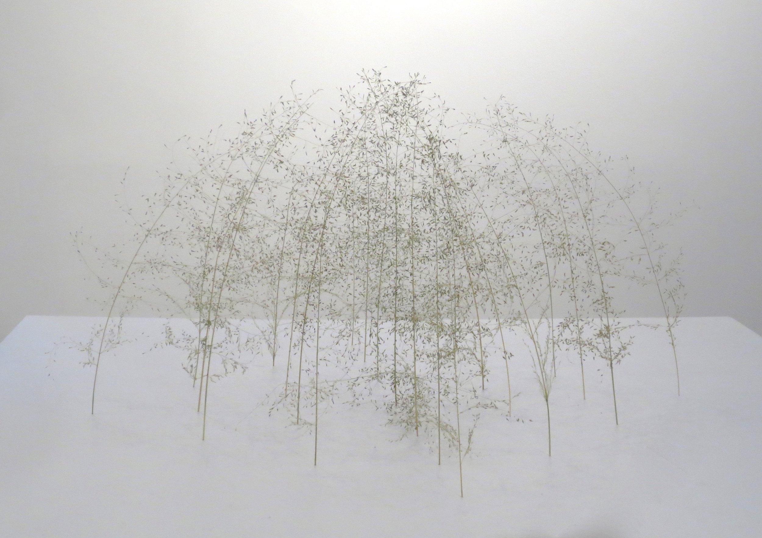 Christiane Löhr  (B. 1965)  Grass Cube [Grasquader] , 2018 Grass Stalks 11 3/4 x 21 1/2 x 21 1/2 inches 30 x 55 x 55 cm