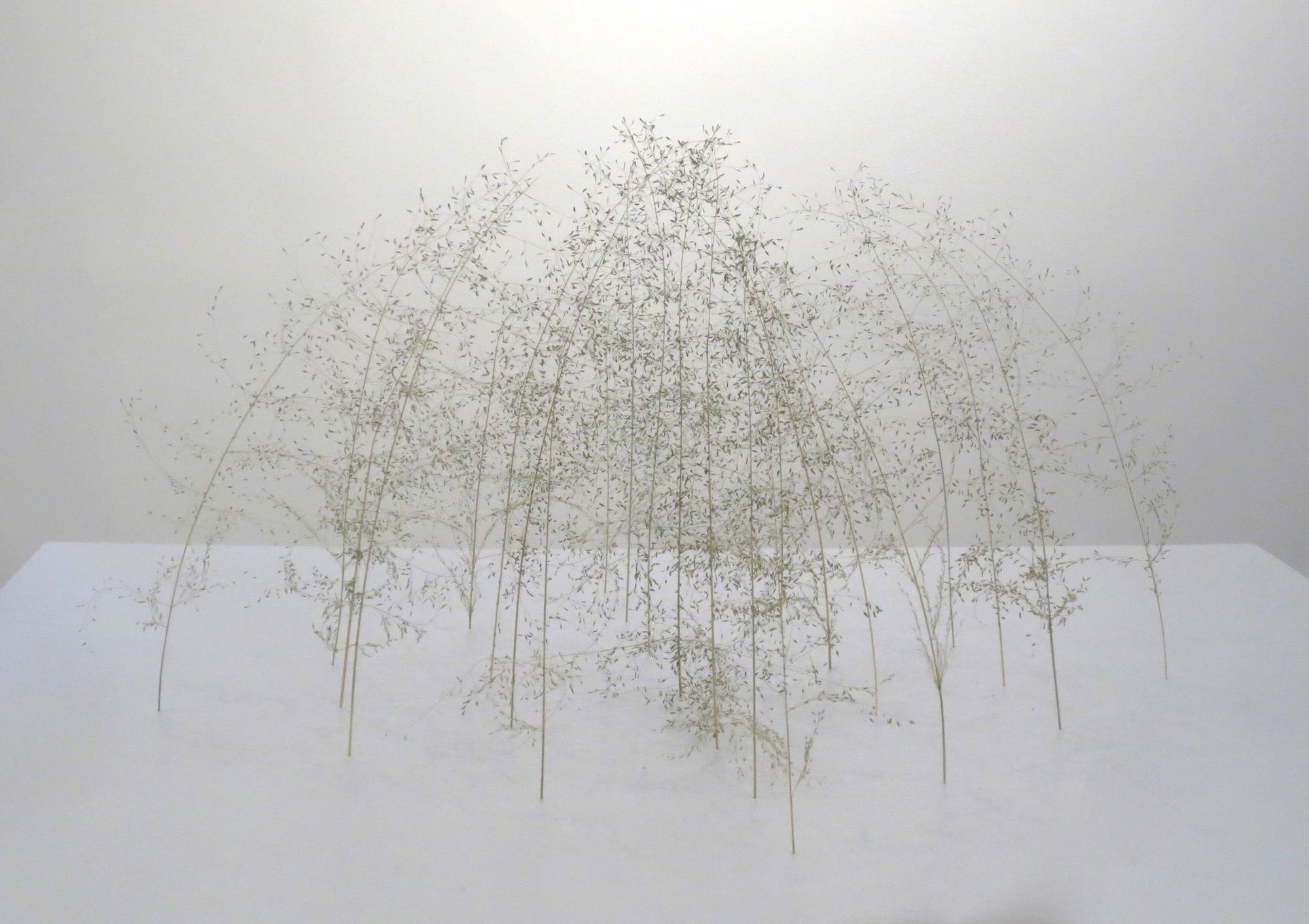 Christiane Löhr    Grass Cube [Grasquader] , 2018 Grass Stalks 11 3/4 x 21 1/2 x 21 1/2 inches  30 x 55 x 55 cm