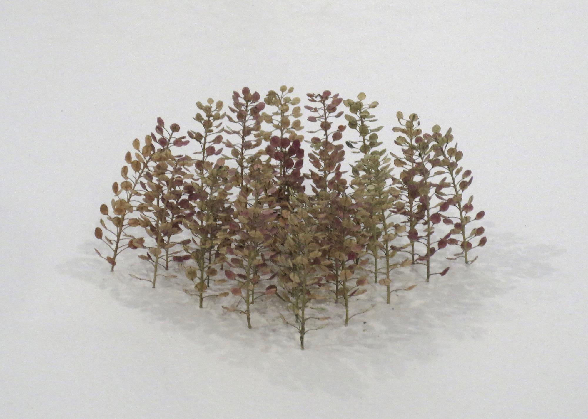 Christiane Löhr    Concave Form/Cube [KonkaveForm/Quadrat] , 2018 Plant stalks 13 3/4 x 3 1/8 x 3 1/8 inches  35 x 8 x 8 cm