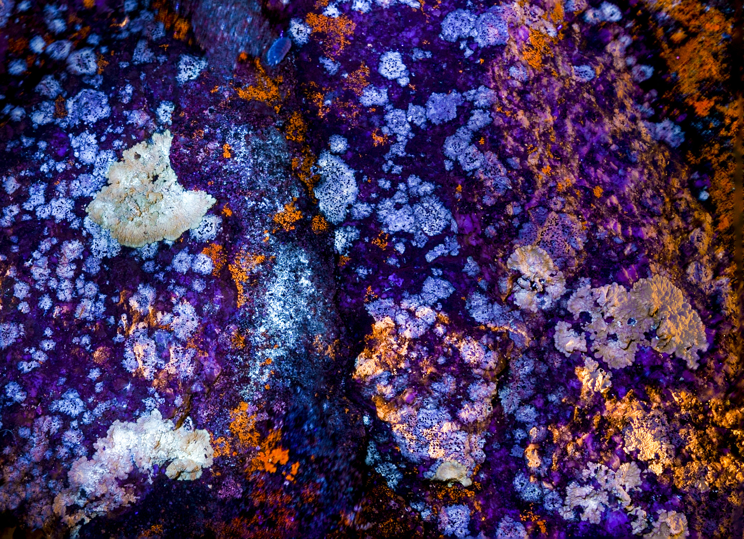 lichenrock.jpg