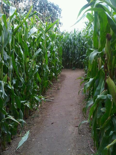 2011-09-maize-maze.jpg