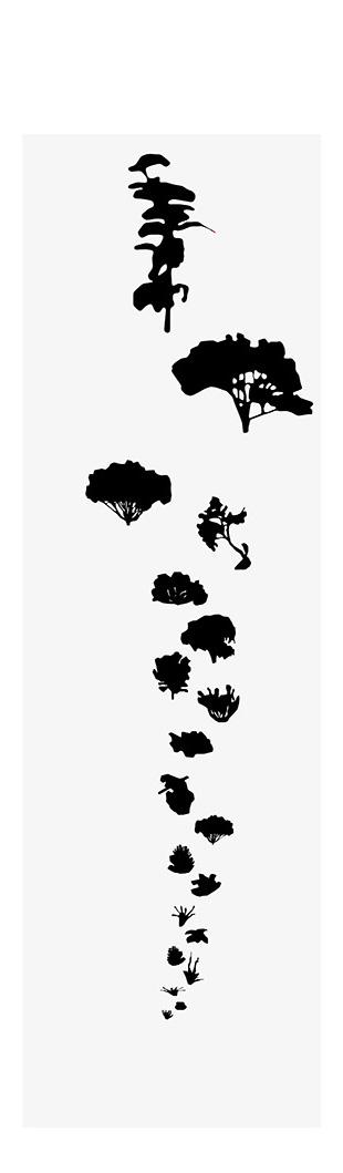 PARTI_01_KangarooIsland_PlantSpeciesAnalysis_02.jpg
