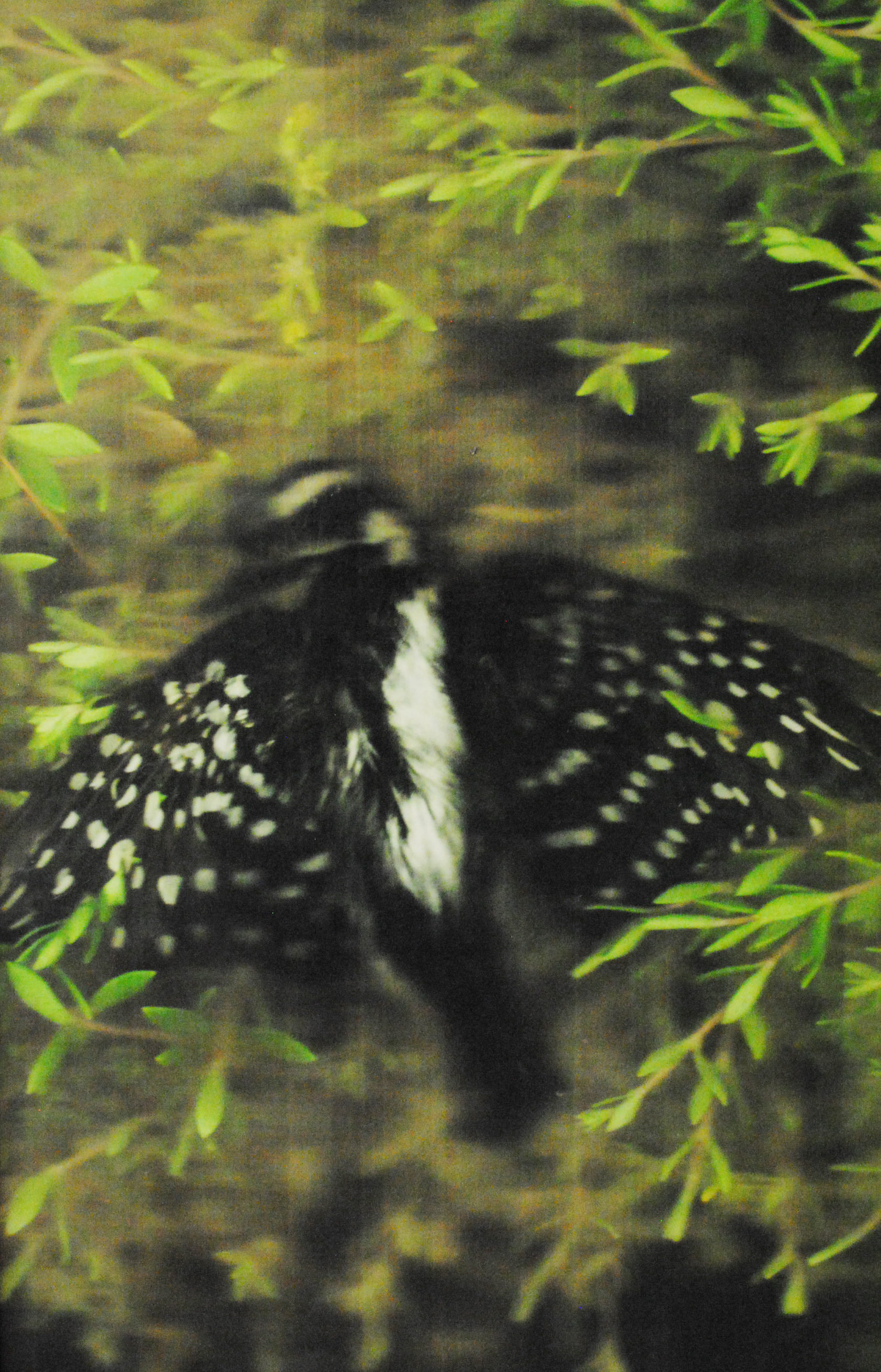"""Linda's Bird"", wand scanned digital image, mounted on board, fused with encaustic, 36"" x 24"""