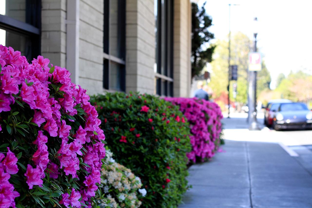 Downtown Mountain View-22-X2.jpg