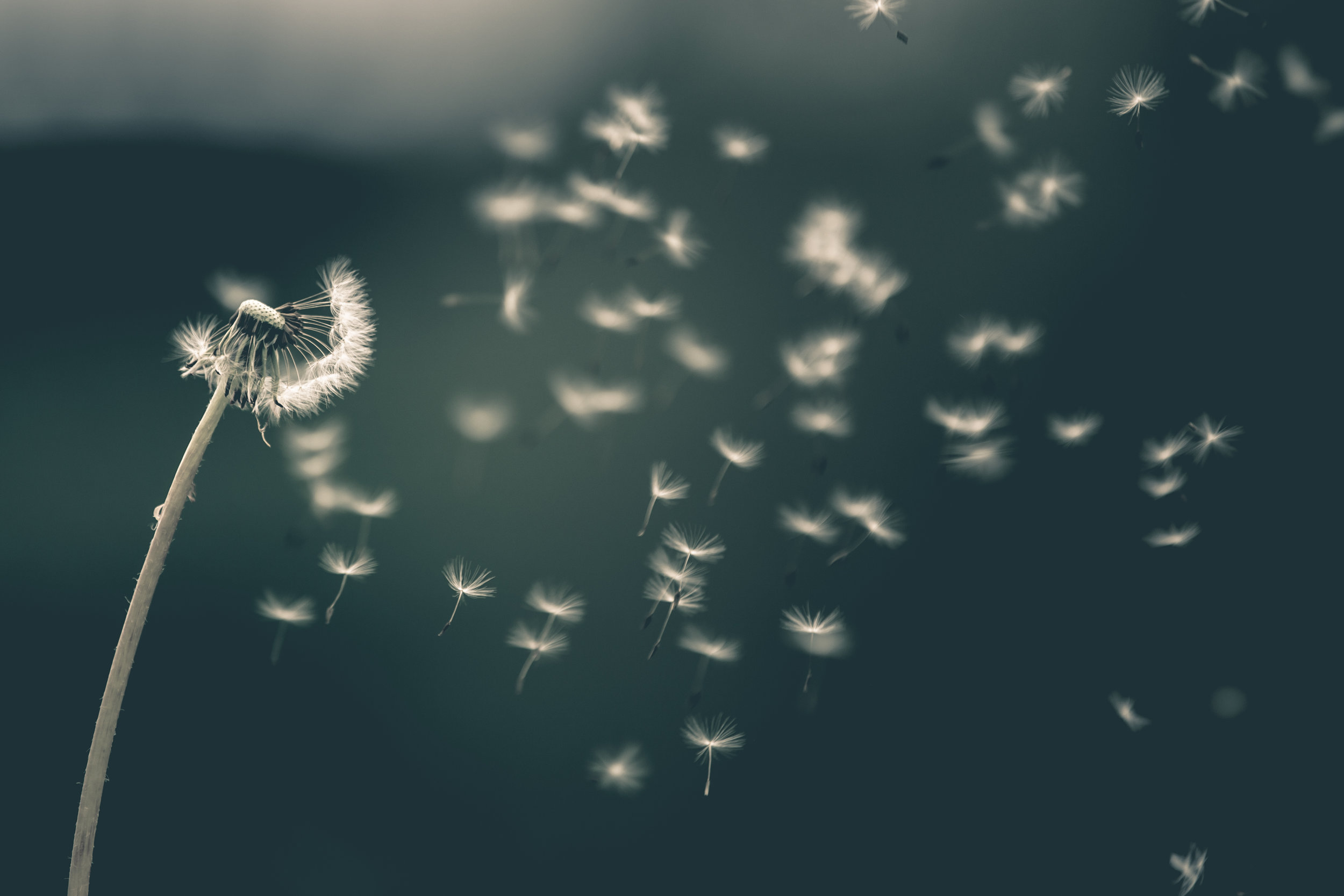 The Holy Spirit -