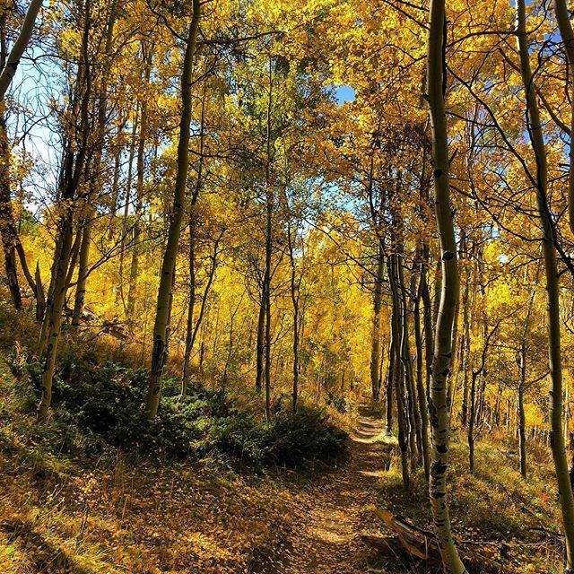 Follow the yellow brick road... beautiful day playing the leaves today on ptarmigan trail in Silverthorne!  #findyouradventure #naturegram #takeahike #thegreatoutdoors #neverstopexploring #optoutside #liveoutdoors #liveyouradventure #stayandwander #keepitwild  #adventureculture #staywild #exploreearth #womenwhoexplore #inwildmeadows #sheexplores #goodtimesoutside #amongthewild #everytrailconnects #mountainculture #itsbetteroutside #exploremore #choosemountains #findmeoutside #allwomenalltrails