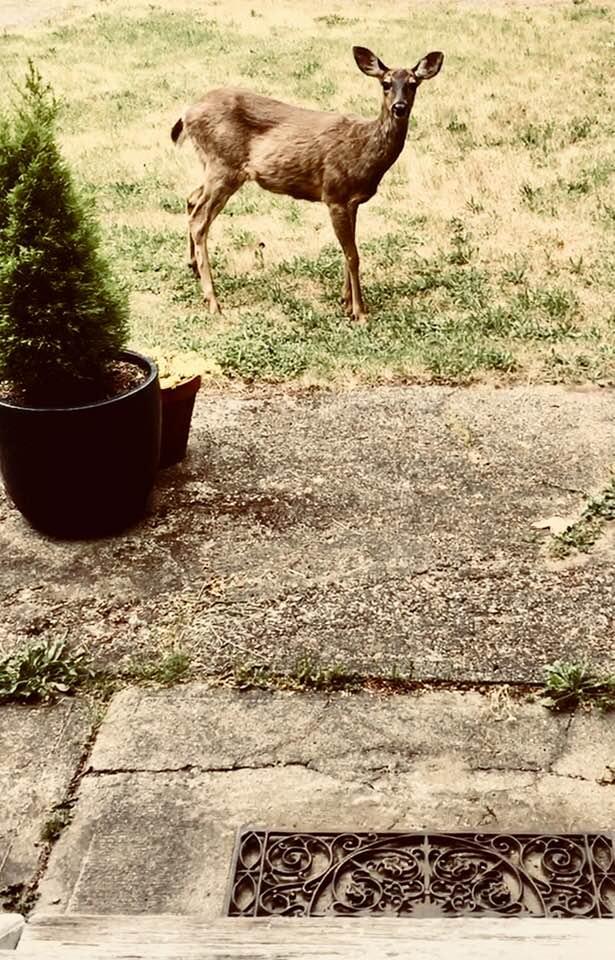 deer-at-the-door.jpg