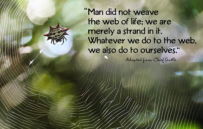web-of-life-fb.jpg
