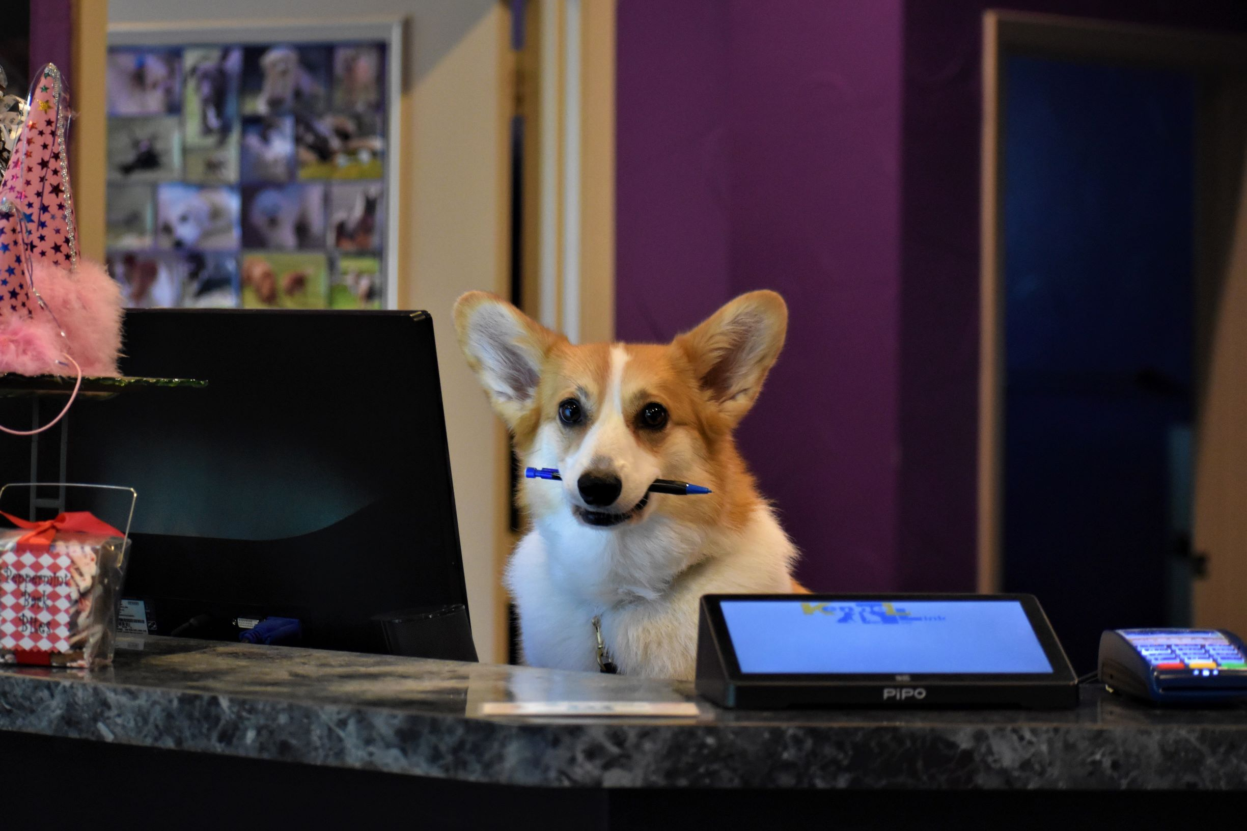 """Izzy, our """"Pawssistant Managrrr"""", welcomes you to Doggie Zen Den!"""