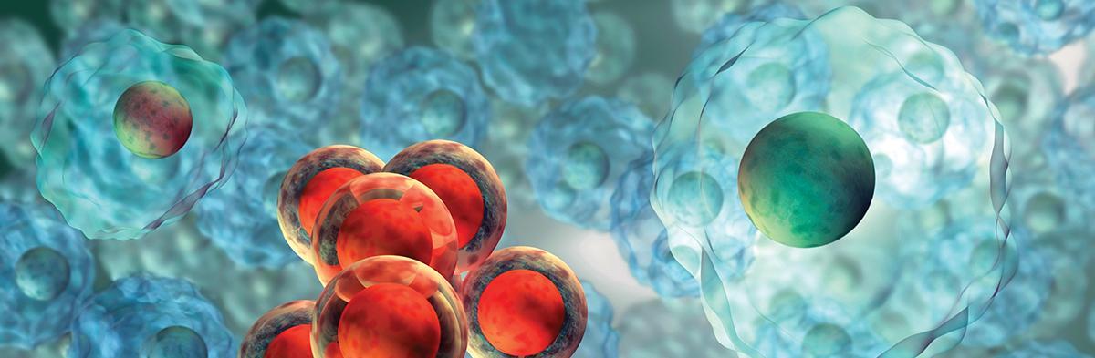 Bilde: Stamceller og inflammasjon.