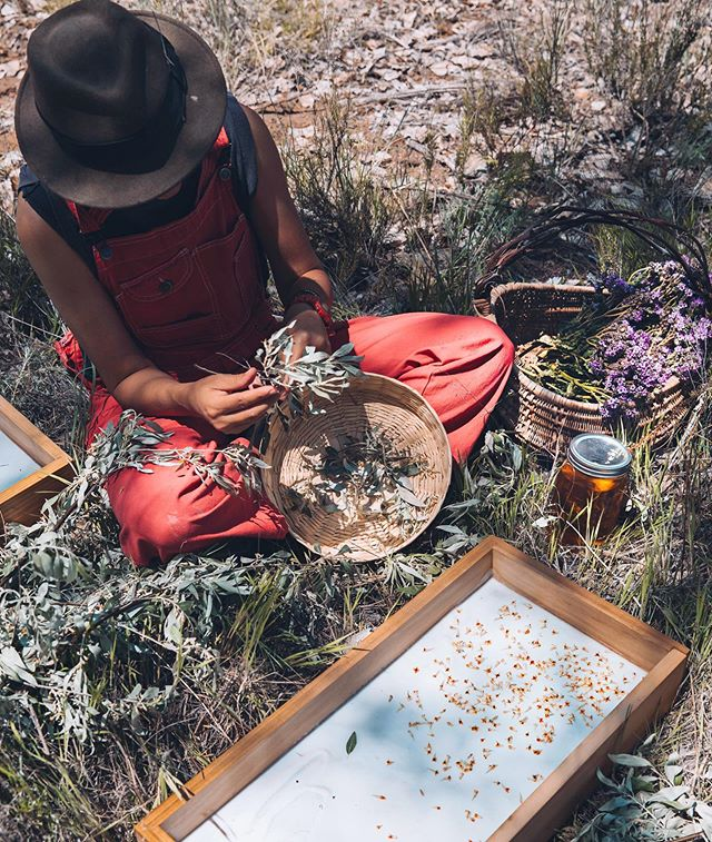 New episode is live with the dynamic duo behind @drylandwilds. They created a beautiful organic fragrance and skincare business that wildcrafts sustainably by prioritizing invasive and common desert plants that otherwise get eradicated by chemicals. They honor these dryland plants by turning them into incredibly aromatic desert perfumes 🌱 . I was invited to go on a foraging expedition to harvest Russian Olive and take part in an ancient perfumery process called enfleurage. It's an incredible ritual that demands attention and respect for the balance of the land. And no one captures the essence of New Mexico like Dryland Wilds 🌵  Listen as we commune with nature, talk about synthetic vs natural fragrance and how to capture a scent of place 💫 . Link in bio! iTunes, Spotify, Soundcould 🌸 . . . . . . #newmexico #enfleurage #perfume #organicskincare #naturalbeauty #forageandharvest #ancient #podcast #podcastshow #organicbeauty #purenm #ecobeauty #forage #flowerpower
