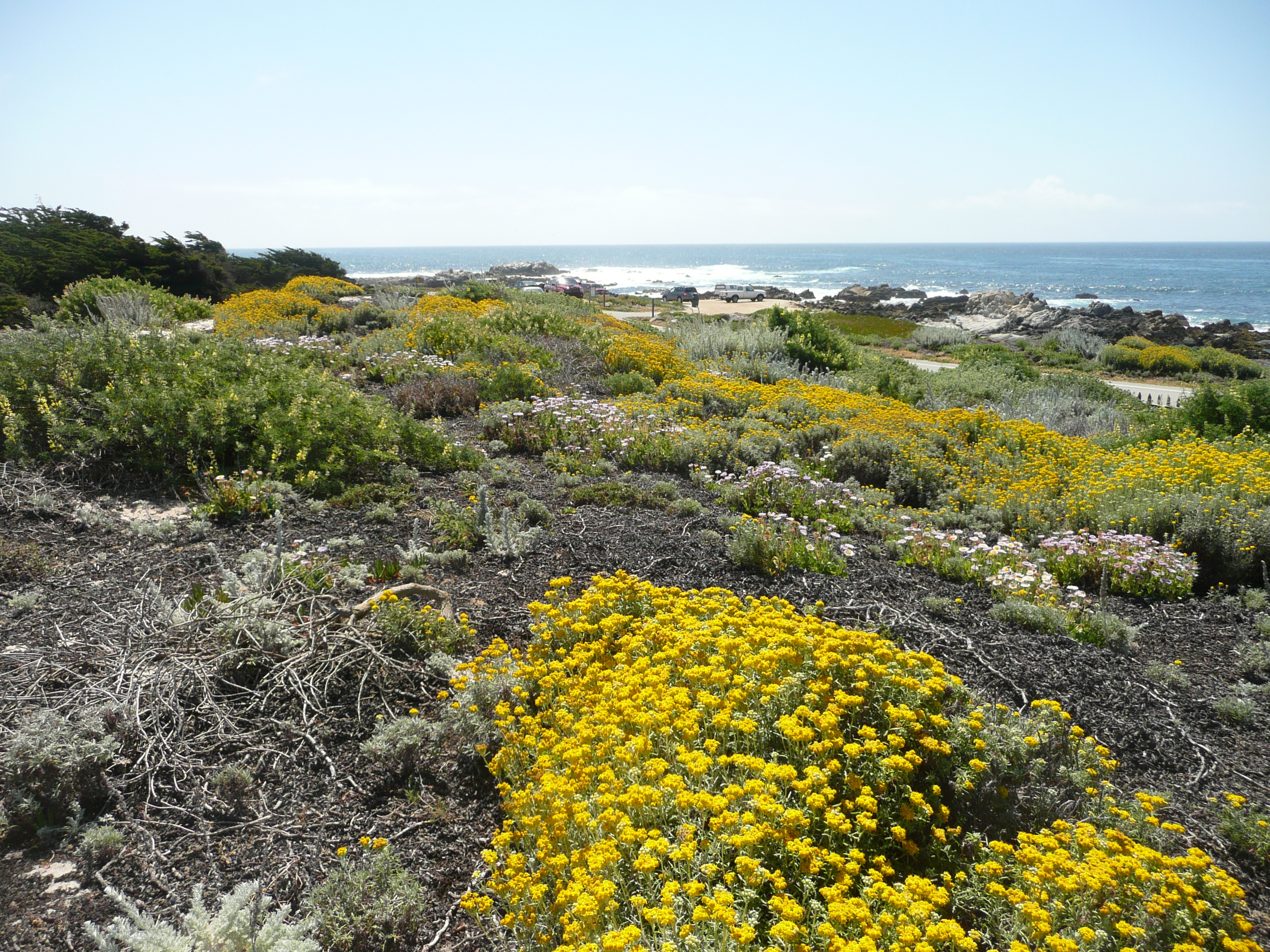 Pacific+Grove+Dune+Restoration+2+-+credit+John+Wandke.jpg