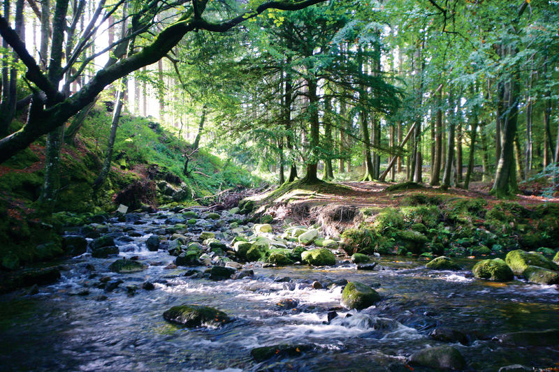 PIC-Tollymore Park (1).jpg