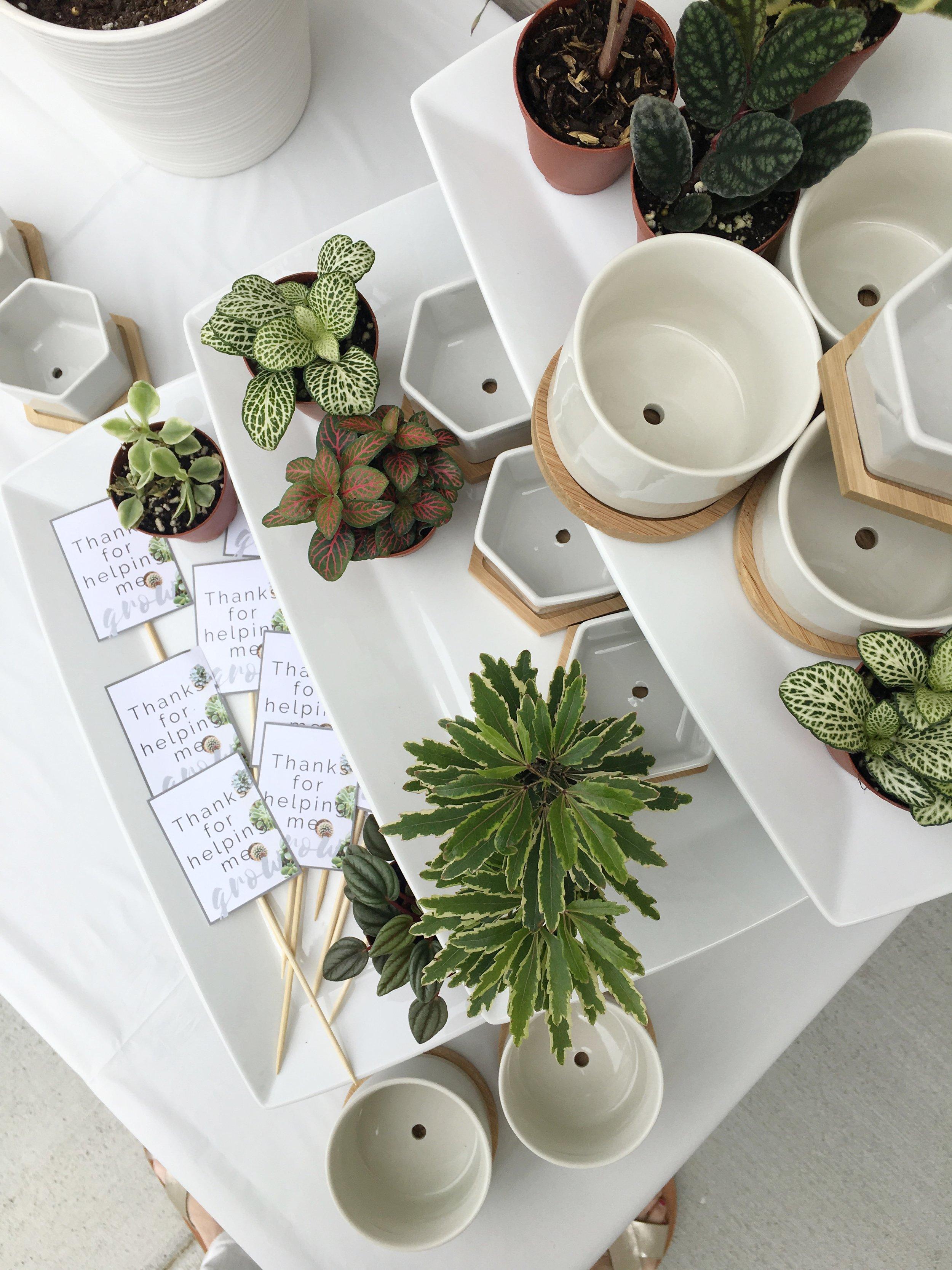 Party favors-build your own succulent planter