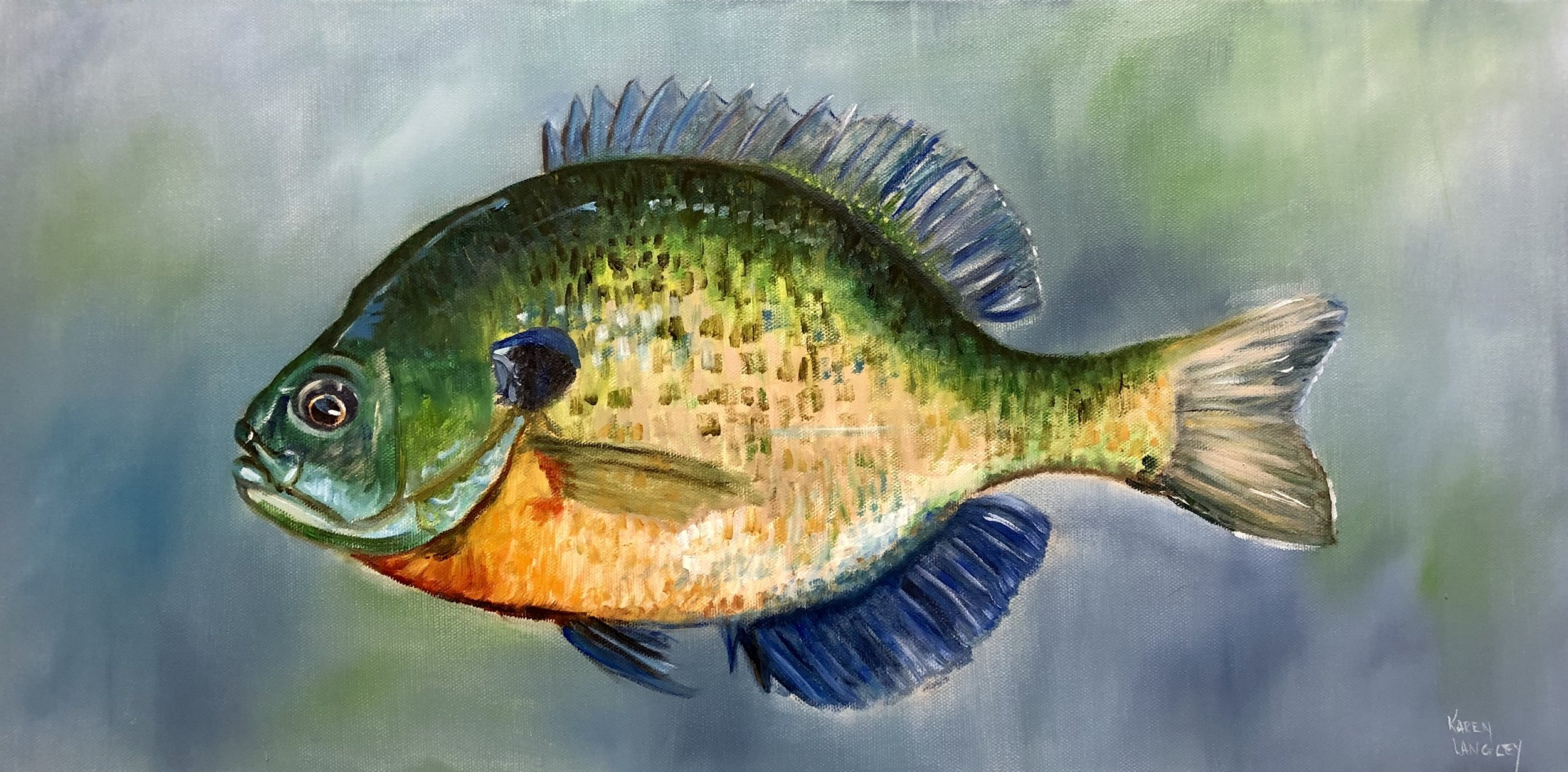 Blue Gill  Oil on Gallery Wrapped Canvas 12x24