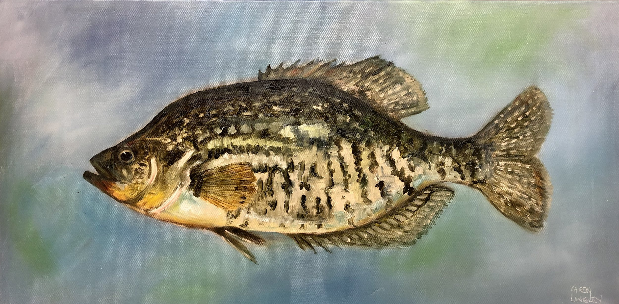 Crappie  Oil on Gallery Wrapped Canvas 12x24
