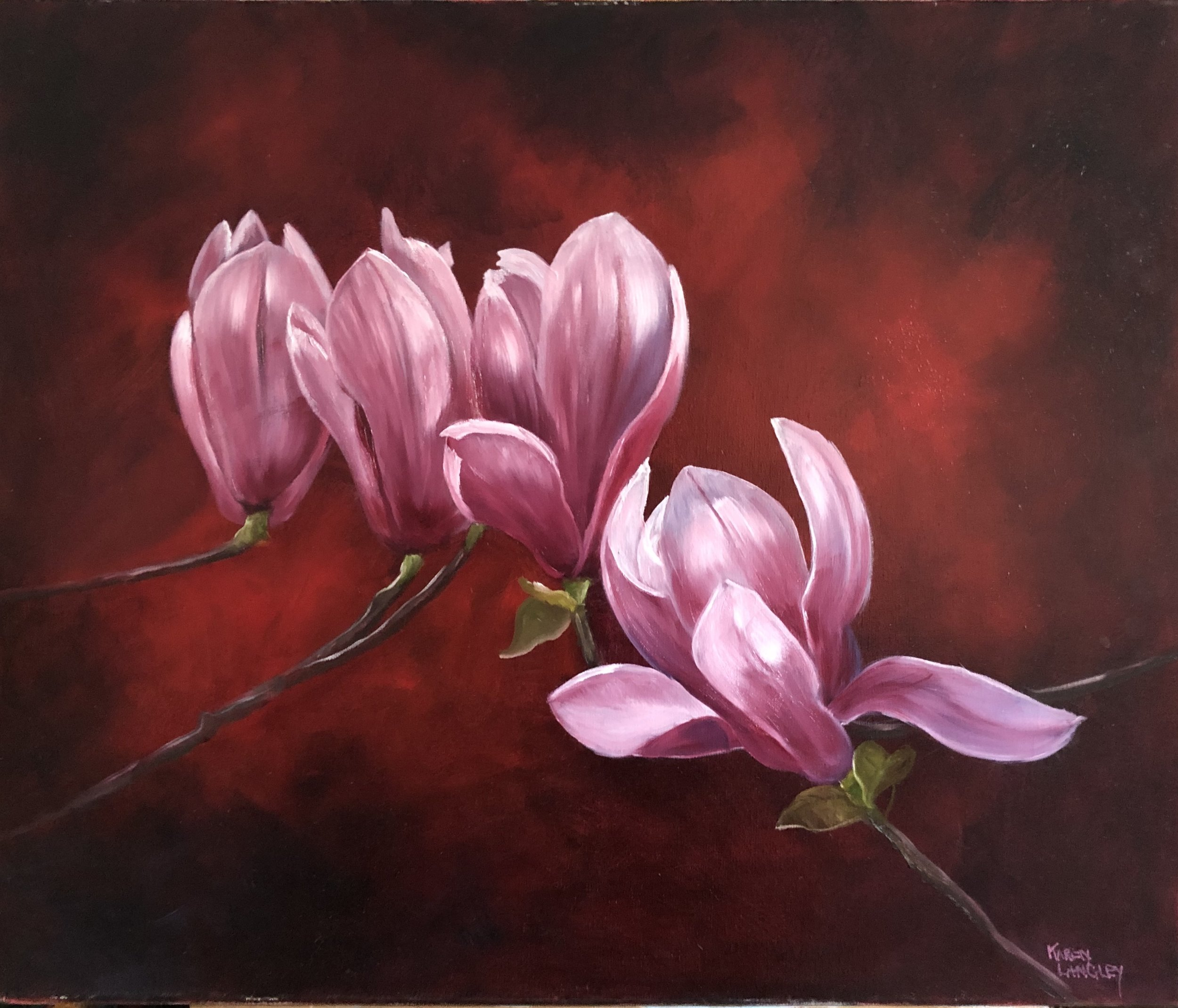 Tulip Magnolias  Oil on Canvas 20x24