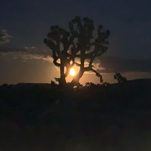 #notthesun Moonrise last night during another epic #nightskypresentation with #starmansteve @deepskysteve  A fantastic sunset hike, an amazing Moroccan Stew and a moonrise to remember. #joshuatreeexcursions #journeysnotdestinations #trailsarecliche #jtnp #joshuatreenationalpark #socal #mojavedesert