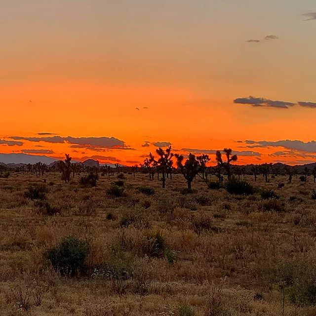 Watching the #sunset on another epic #joshuatree day.#dinner is ready and #star man Steve is preparing to take you on a journey through the #cosmos #perfectendings await you in #joshuatreenationalpark #joshuatreeexcursions #journeysnotdestinations #trailsarecliche #socal #jtnp
