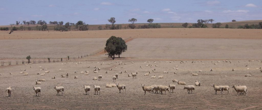 PIC - Riverina_Sheep_during_drought-1500x630-1024x430.jpg