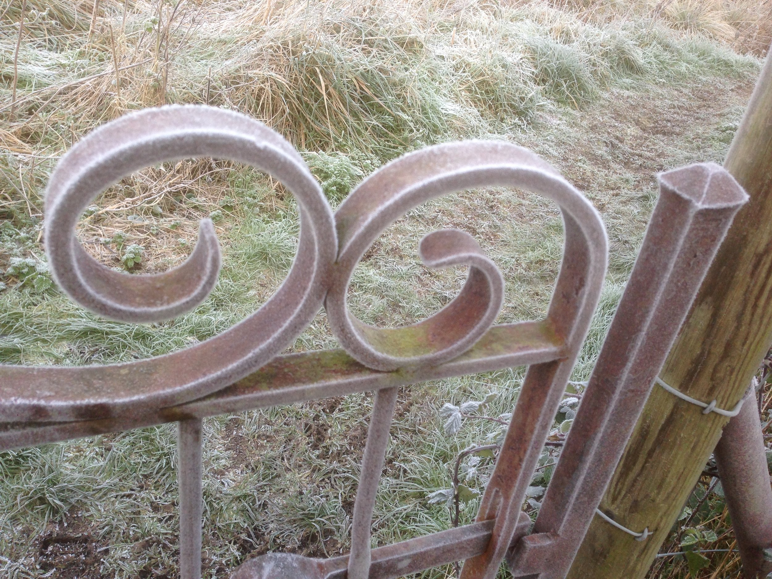 Frost picks out scrollwork on a rust finished garden gate.