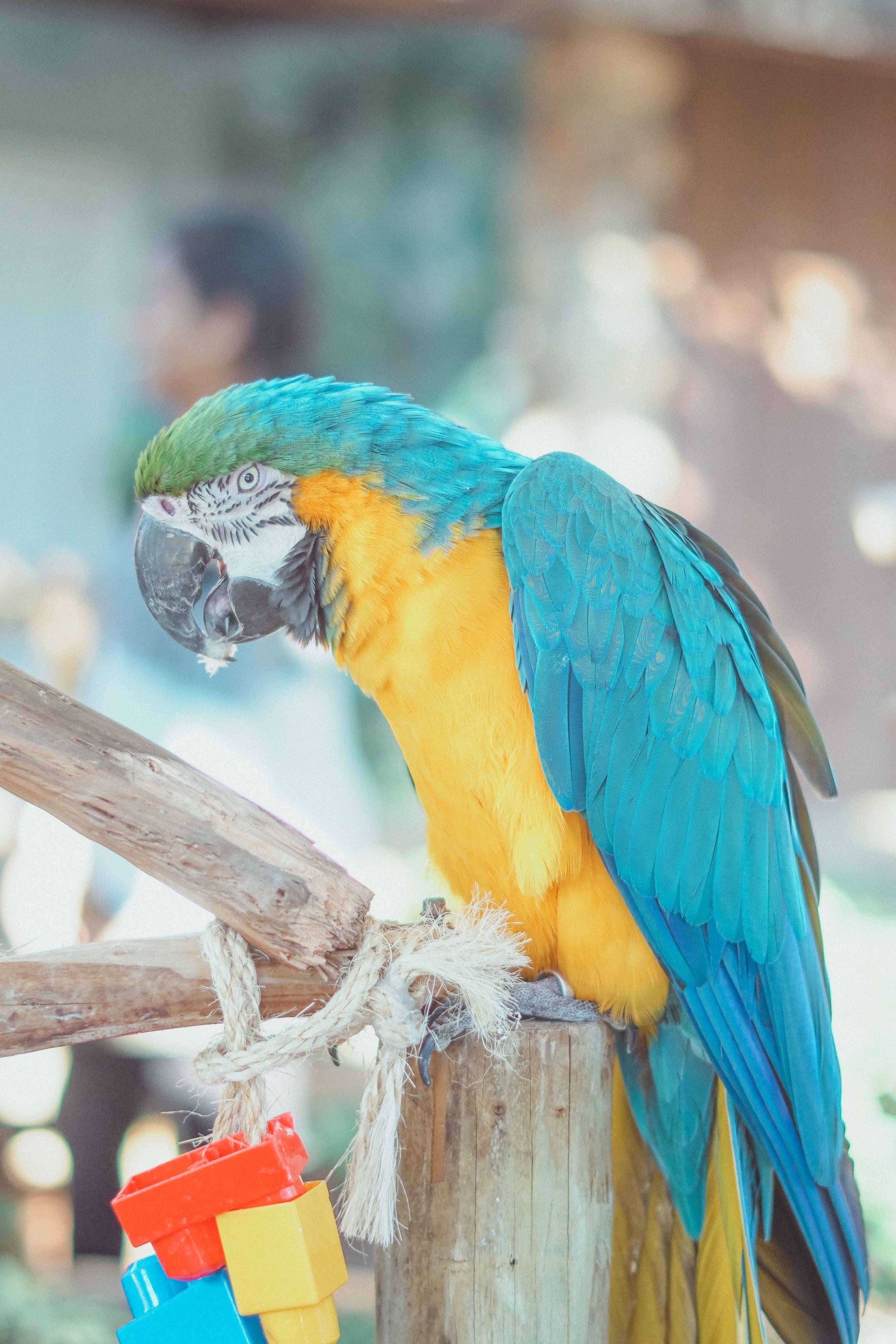 free stock photo example parrot.jpg