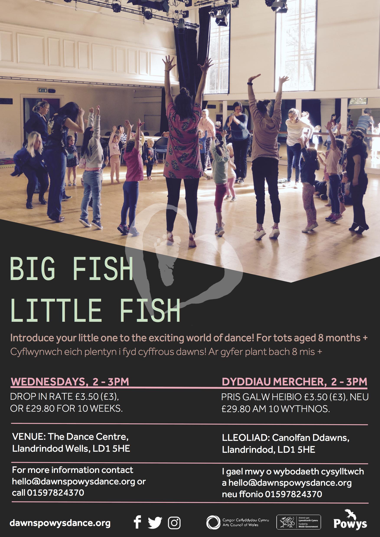 BIG FISH LITTLE FISH LLANDRINDOD.jpg