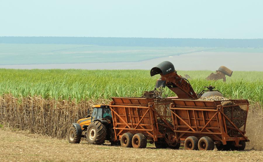 Harvesting sugarcane, São Paulo, Brazil
