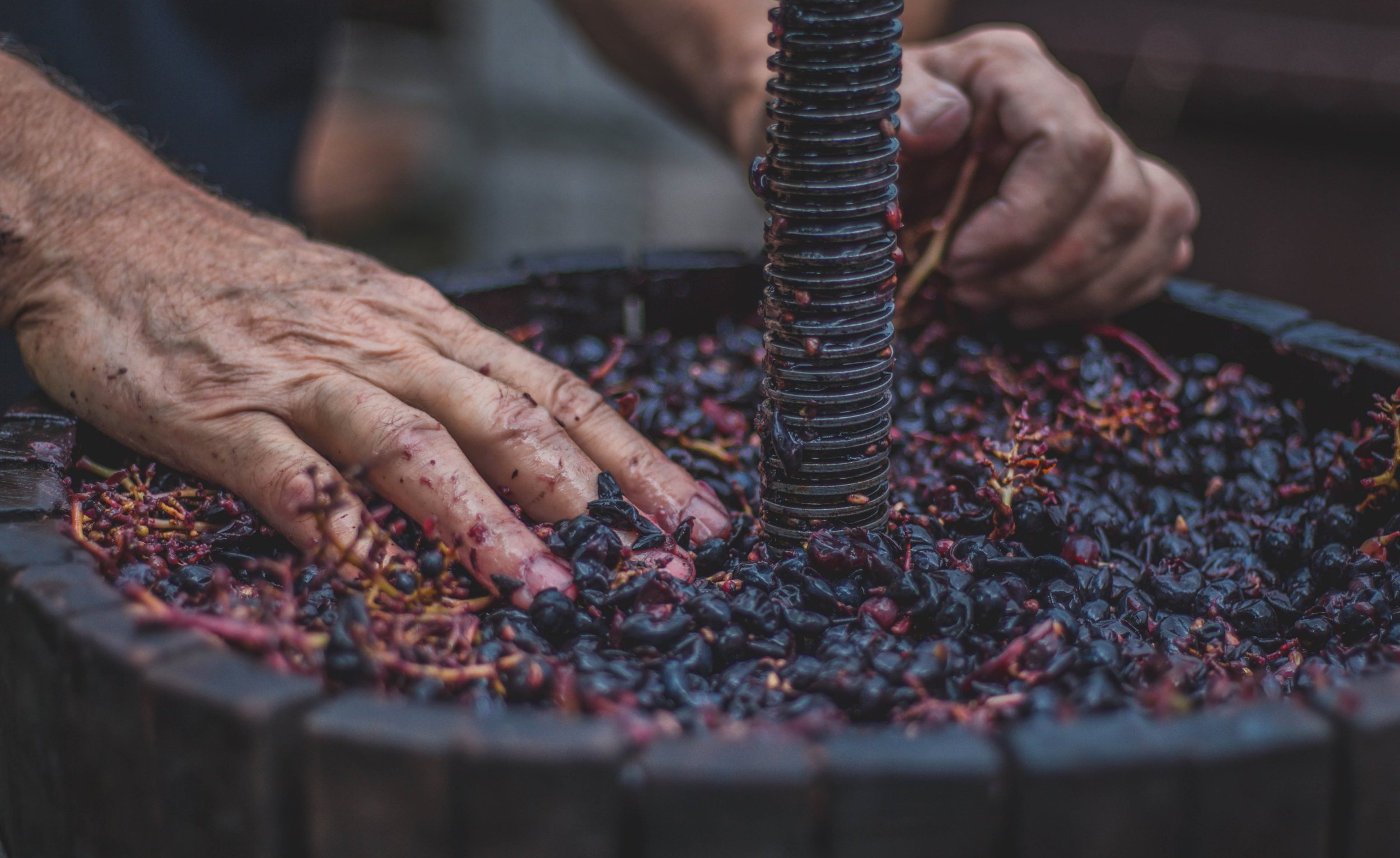 - The climate and conditions make Georgia ideally-suited for viniculture, and the country's pristine ecosystem creates the environment for wines of exceptional purity.