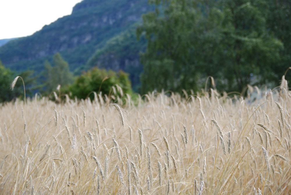 Jordbruksskulen_3.jpg