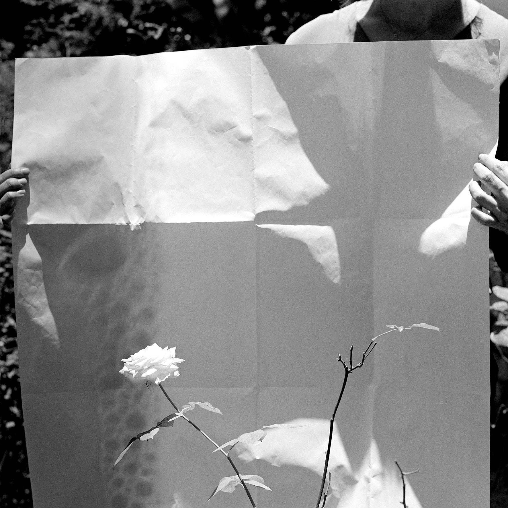 Herbier [V] 02 cópia.jpg