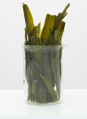 Icelandic, Dulse, or Red Seaweed -