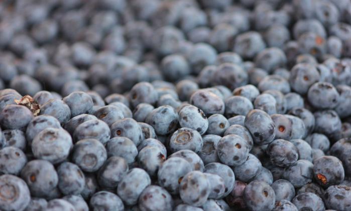 Wild Blueberries -
