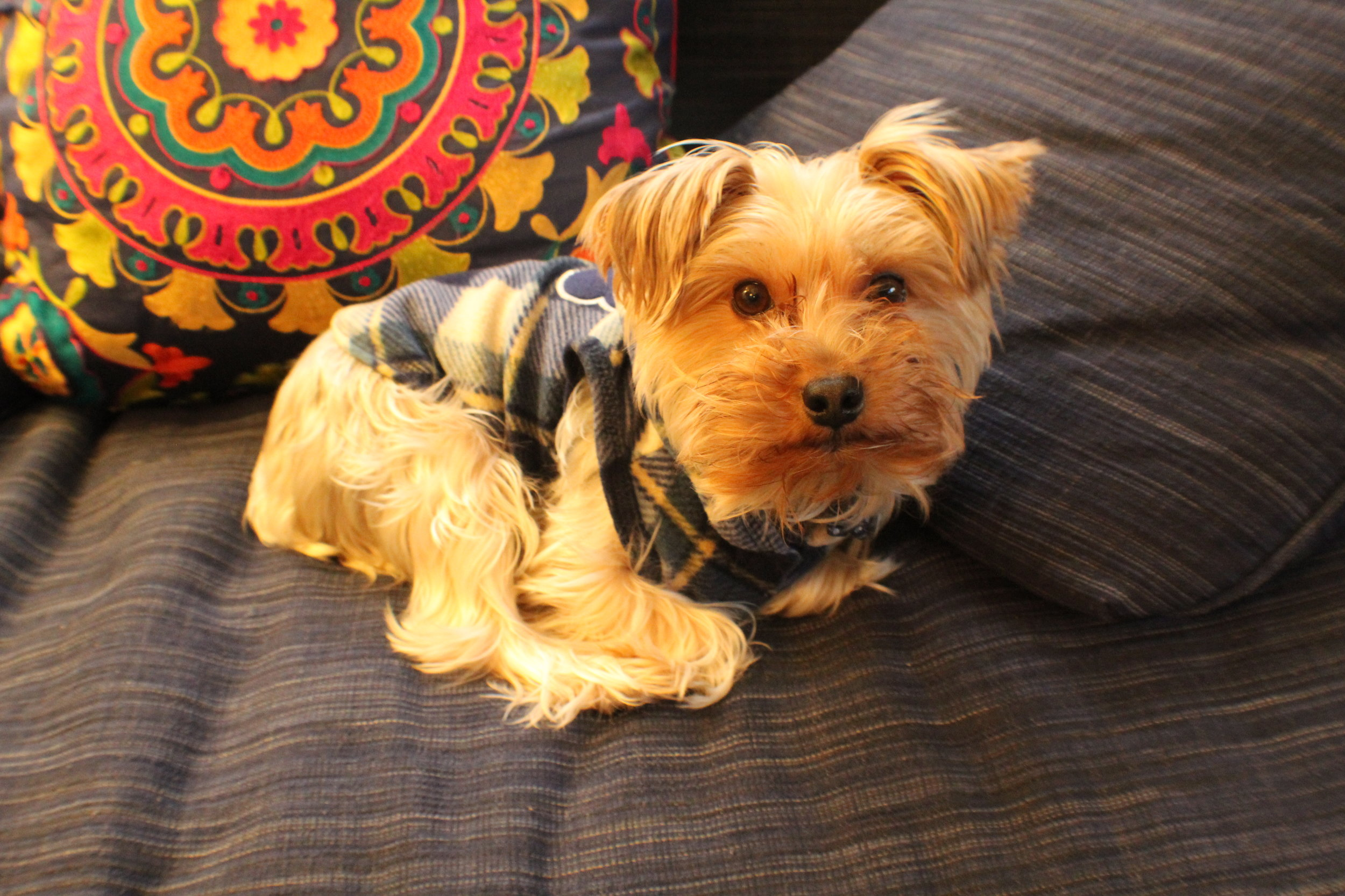 Puppy Emotional Support -