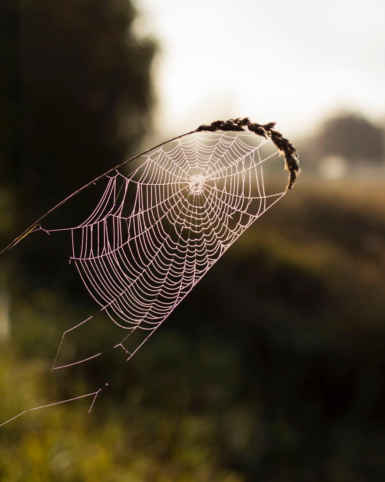 Morning cobwebs-1.jpg