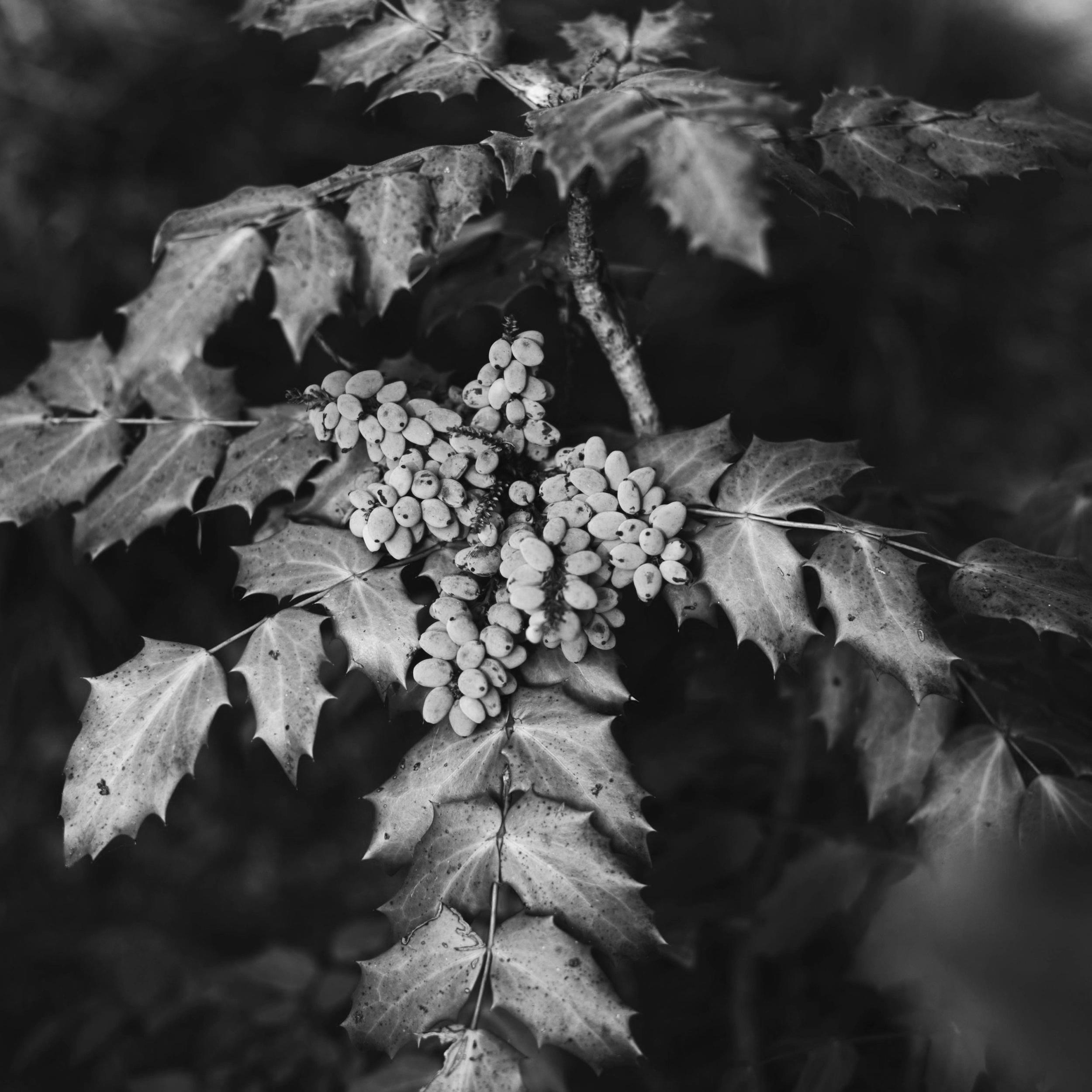 natural+blueberries.jpg