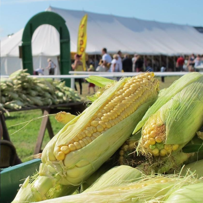 A.E. Brown Farms - Sweet and juicy sweetcorn smothered in hot garlic butter, does it get any better than that? The sweetcorn on the Wave Project's charity BBQ has travelled a matter of minutes from A.E Brown Farms in Arreton, just along the road from the festival site!