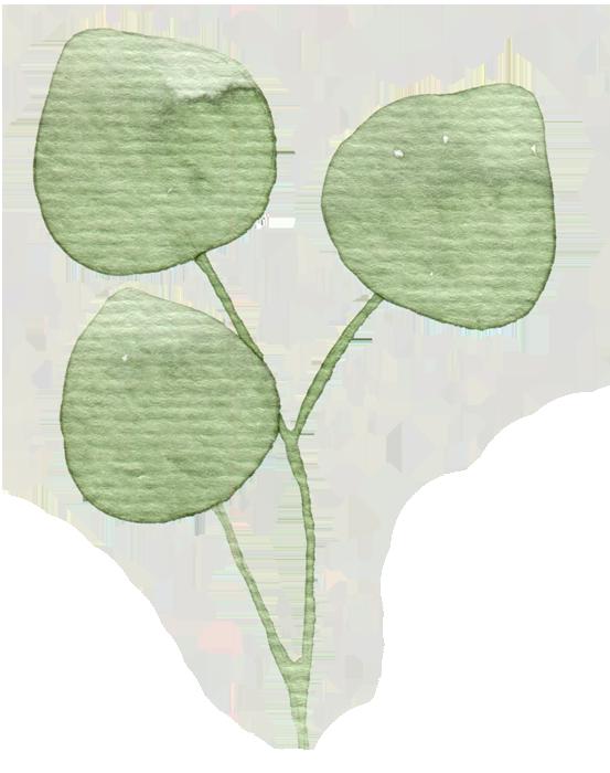 Botanika_Eucalyptus copy.png