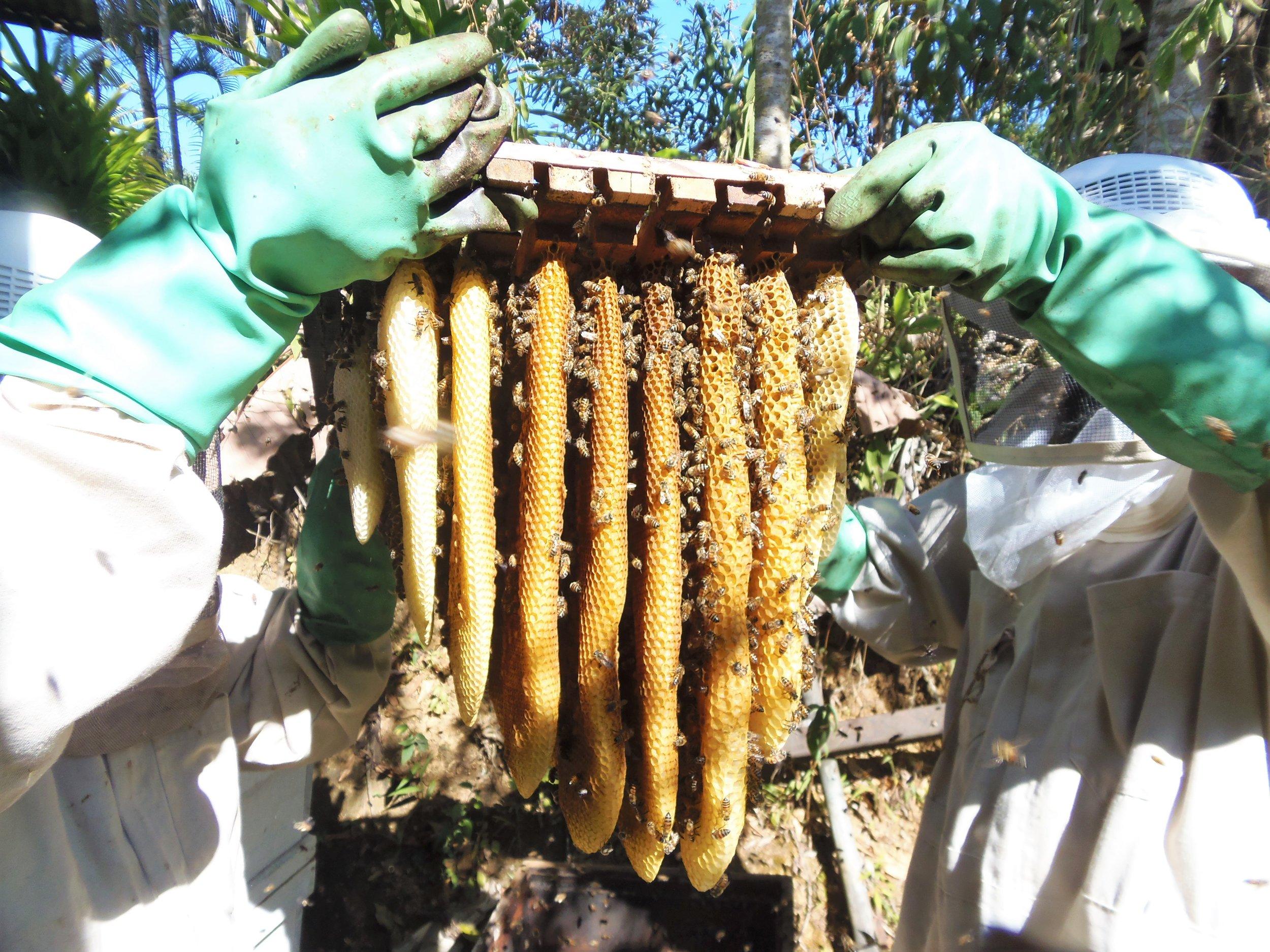 Abejas y Miel Farm - Puntarenas Province
