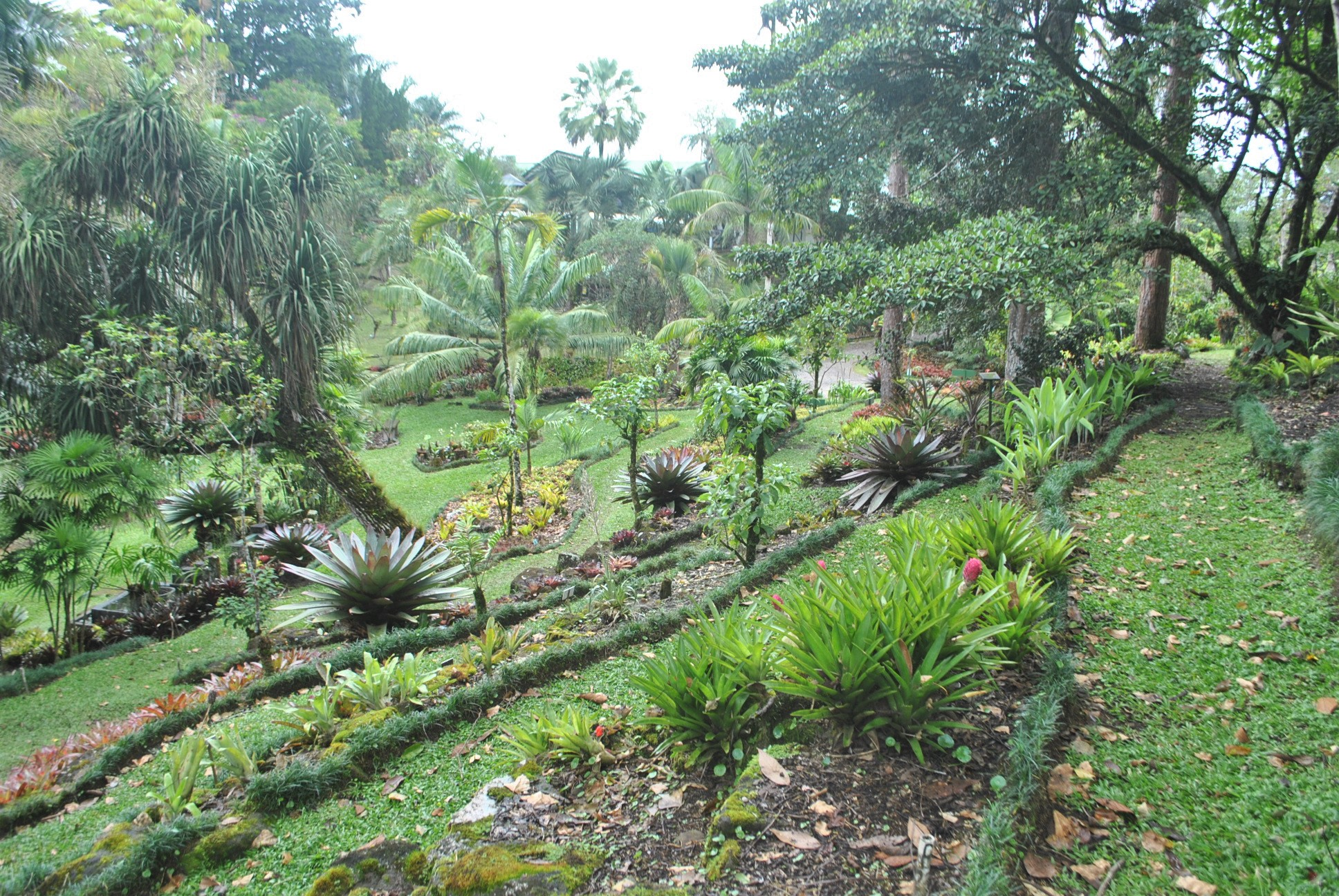 Wilson Botanical Gardens - Puntarenas Province