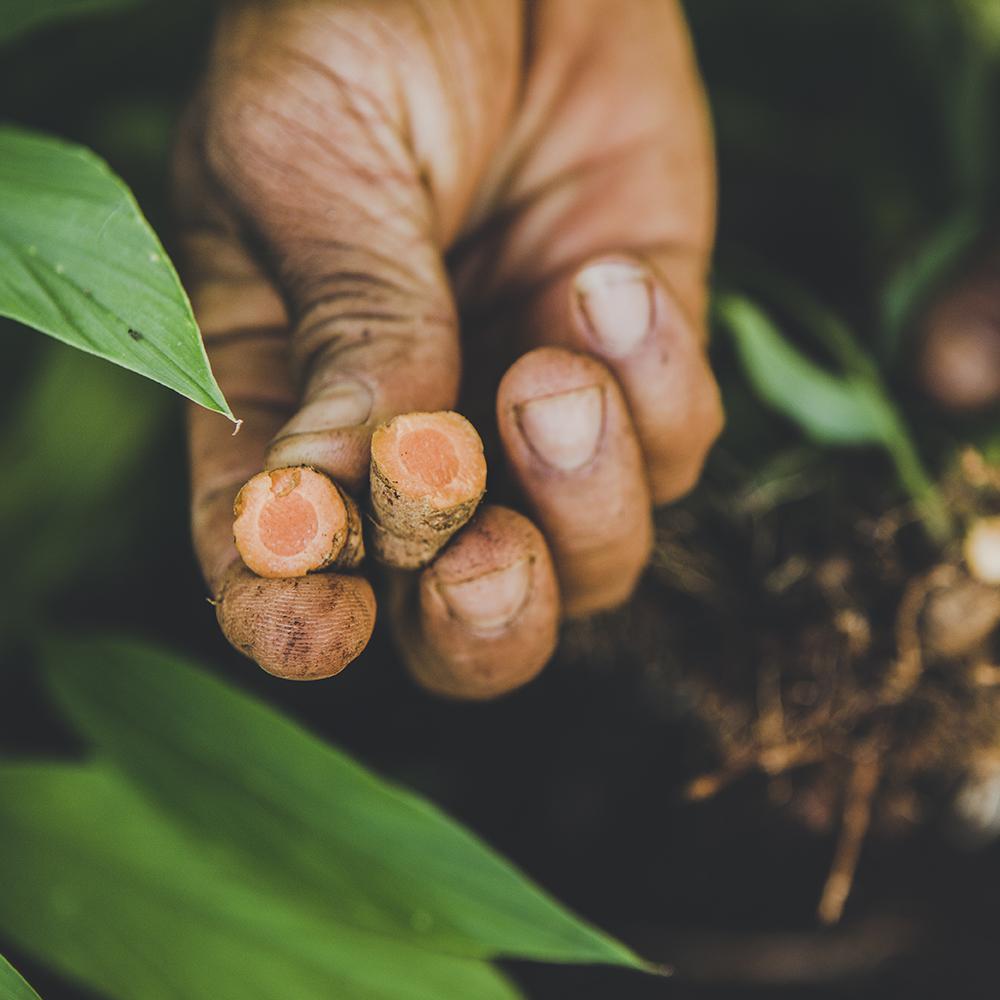 Moringaia_ingredients-turmeric.jpg