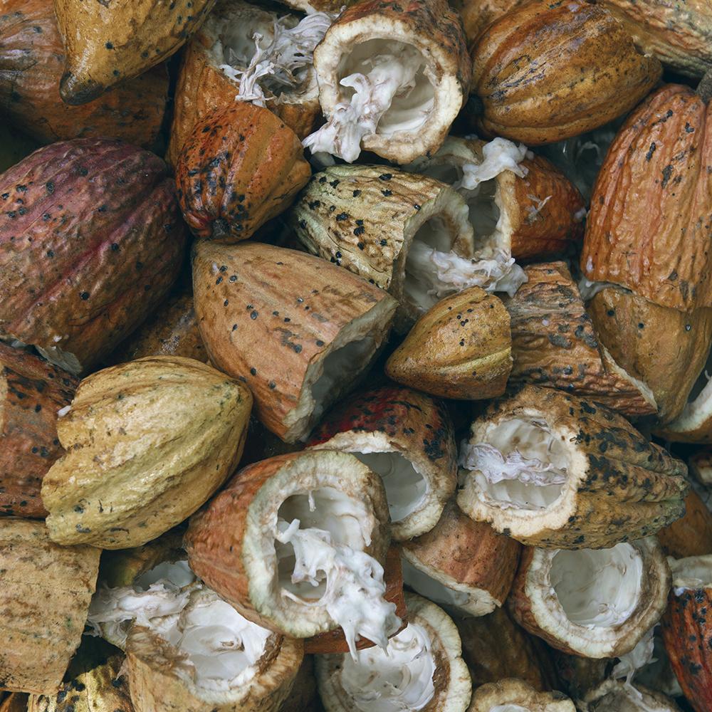 Moringaia_ingredients_cacao.jpg