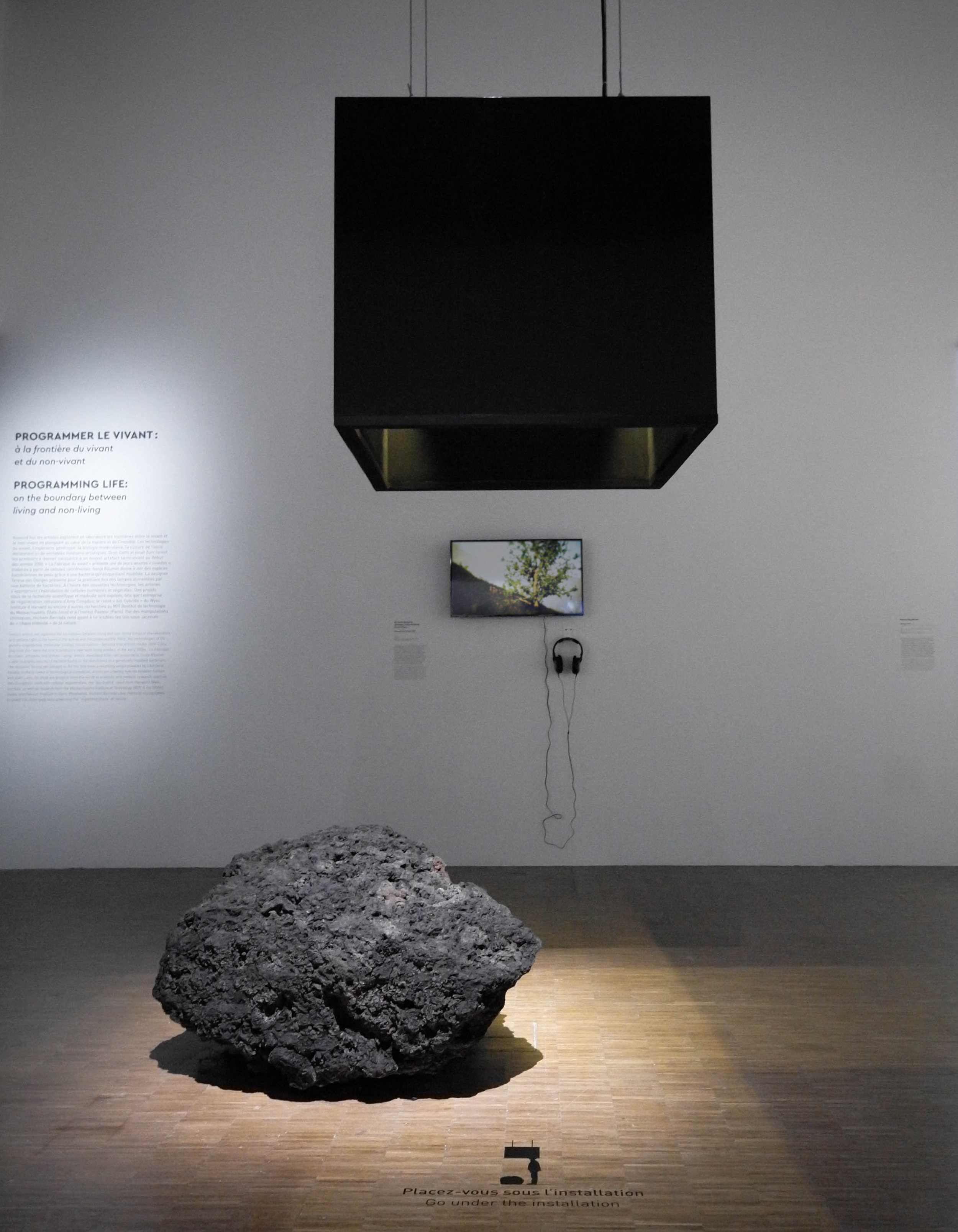 Installation at La Fabrique du Vivant, Centre Pompidou.  Resurrecting the Sublime: Hibiscadelphus wilderianus  Rock (smell diffusion hood, lava boulder, documentary film), February 2019.