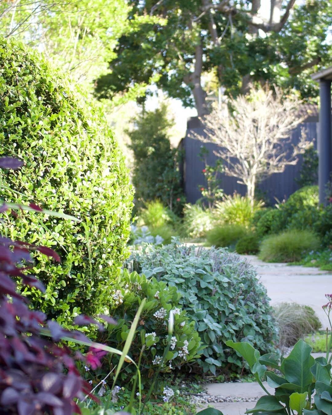 Caprera garden 1.jpg