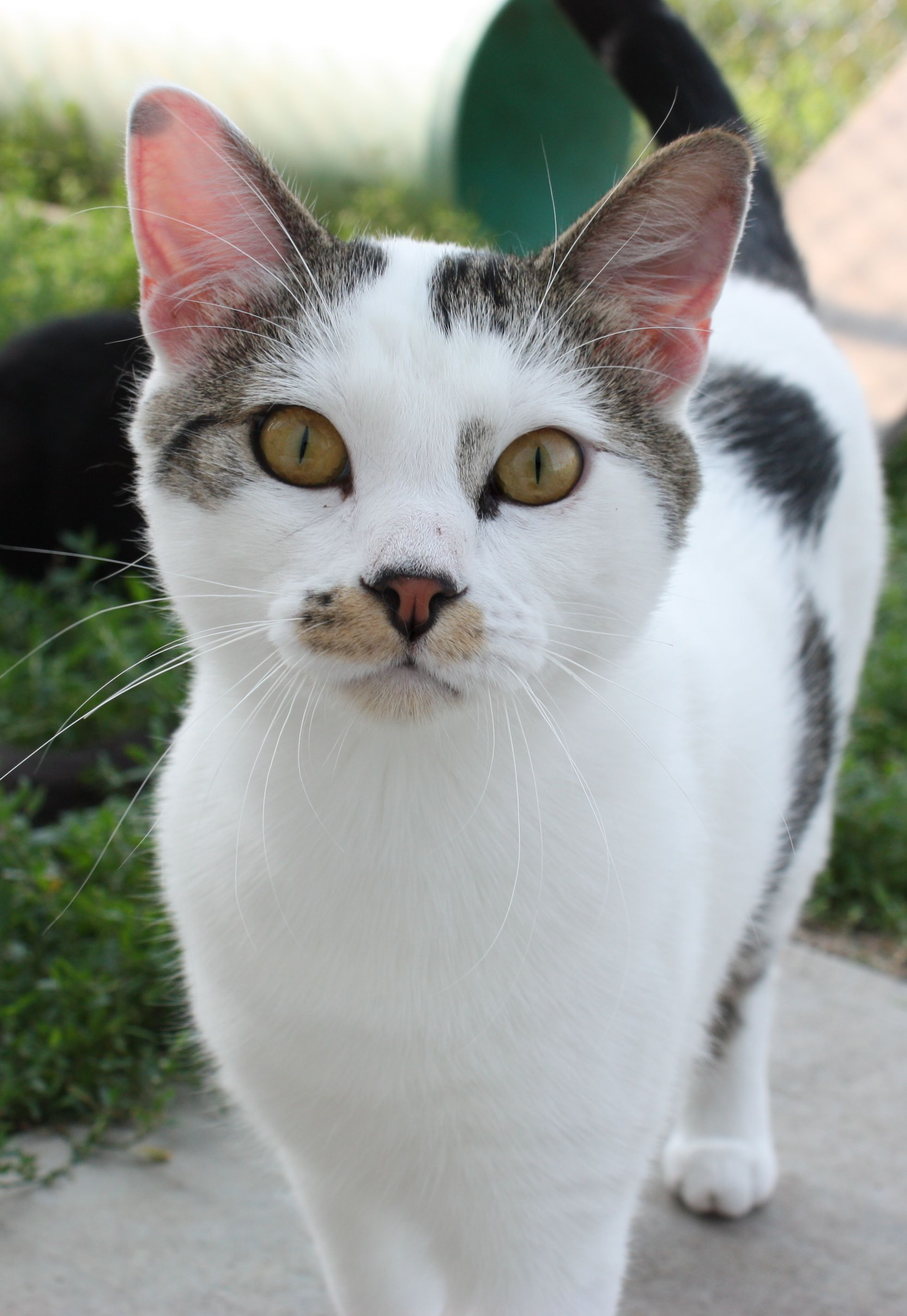What We Do - Our objective is to improve life for cats, dogs and our community. St. Francis Animal Shelter was founded in January of 1997. We are a NO KILL shelter providing shelter for more than 170 animals each year along with low-cost vaccinations, microchipping, and spay & neuter clinics.