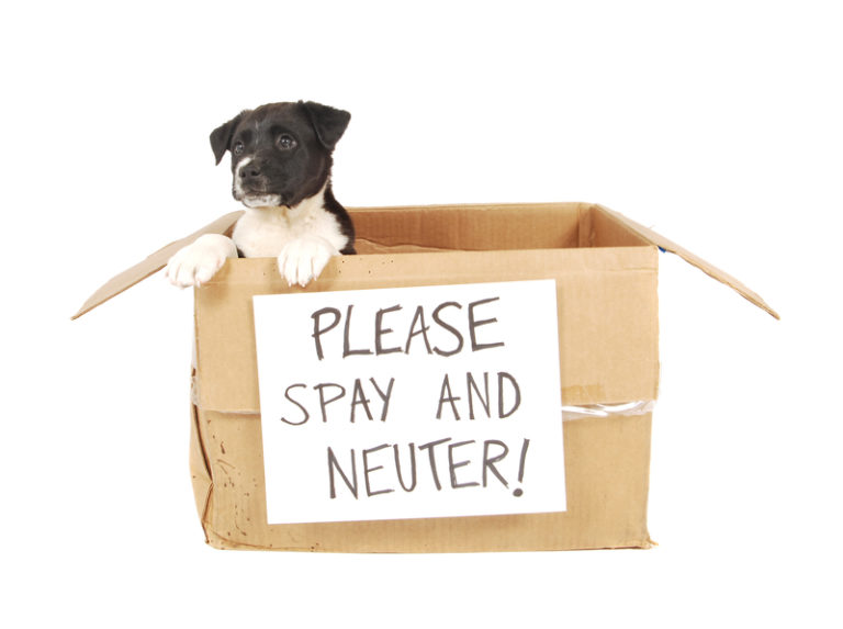 Copy of Spay & Neuter