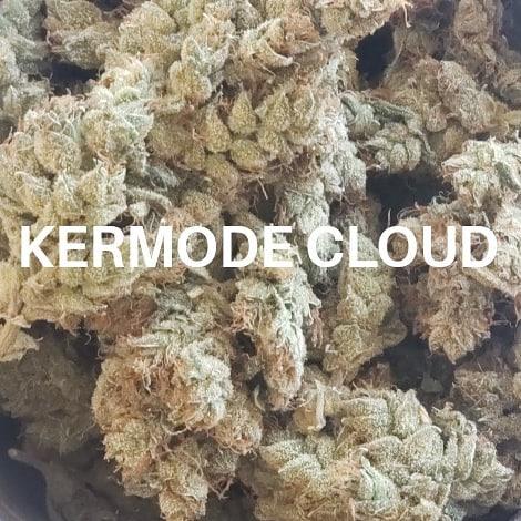 #aniskowask #kermodecloud #craftcannabis #vancouver #weed #thishowweroll
