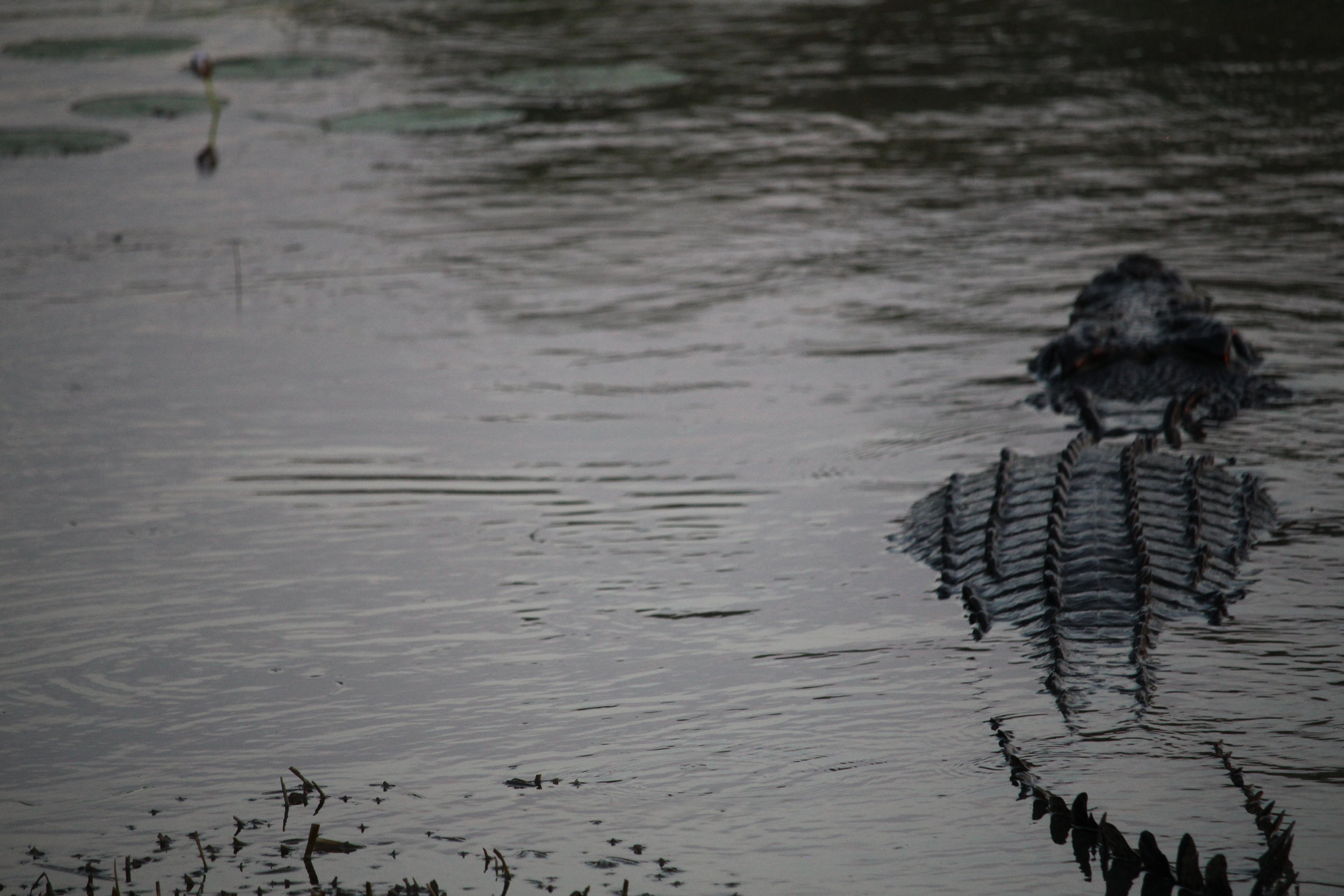 Croc rear.JPG